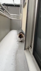 冷たすぎて「キーン」てなっちゃった!? 雪に触れた猫さんのリアクションがおもしろかわいい