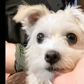愛犬の「ちょっと変わったお手」動画 とにかく癒される