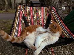 連れて帰りたくなっちゃう…キャンプ場で出会ったネコチャンが人懐っこすぎて幸せな気持ちに