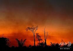 アマゾン熱帯雨林に位置するブラジル・マトグロソ州で起きた森林火災で立ち上る煙(2020年8月6日撮影)。(c)CARL DE SOUZA / AFP