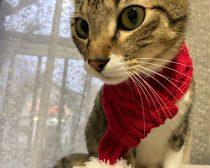 [画像] ダイソーの「猫用おもちゃ」が超優秀。猫大はしゃぎの様子をリポート