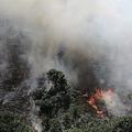 アマゾンの熱帯雨林が記録的なペースで焼失 森林火災の発生件数が過去最高