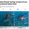 男性2人がジンベイザメの背中に乗って「サーフィン」写真が炎上