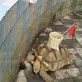 甲羅にカゴが貼り付けられたカメ(画像は『The Sun 2019年10月11日付「CASH N CARRY Vile zoo 'GLUES a basket onto a tortoise so tourists have something to aim at when they throw coins for luck'」(Credit: WEIBO)』のスクリーンショット)