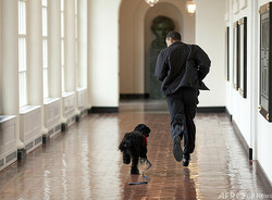 バラク・オバマ元米大統領とホワイトハウス内を走る「ボー」。ホワイトハウス提供(2009年4月13日撮影)。(c)AFP/The White House/Pete SOUZA