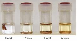 バイオナイロンが消化酵素で分解されていく様子(画像: 北陸先端科学技術大学院大学の発表資料より)