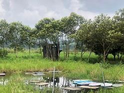 南投県から文化的景観に指定される「頭社古日潭浮田文化景観」=同県文化局提供