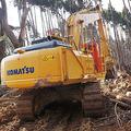 中国が日本から輸入の木材に悲鳴「盗伐された違法品やめてくれ」