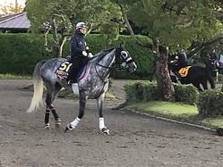 【天皇賞・秋】アエロリット 牡馬一線級に交じってもヒケを取らず