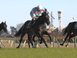 【東京新聞杯】プリモシーンが混戦に断!馬場の真ん中から突き抜ける