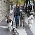 勇気や笑顔をくれる犬映画「僕のワンダフル・ジャーニー」など