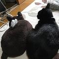ティッシュ箱に間違えられてしまった猫が話題「マーン!」と大声で抗議?