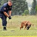 ベルジアン・マリノア種の地雷探知犬と訓練士。ボスニア・ヘルツェゴビナの首都サラエボにある訓練センターで(2020年9月23日撮影)。(c) ELVIS BARUKCIC / AFP