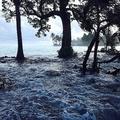 高潮で冠水したマーシャル諸島マジュロ環礁のエジット島(2014年3月3日撮影、資料写真)。(c)GIFF JOHNSON / AFP