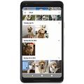 Googleフォトが犬猫の顔認識にも対応 個体を識別してグループ化
