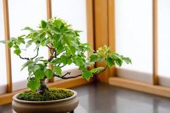 盆栽と植木の違いって何?「盆栽」それは子ども心を忘れた大人こそハマる癒やしの世界