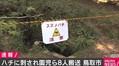 幼稚園児ら8人が山中でハチに刺され救急搬送 巣などは見つからず