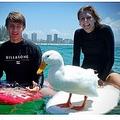 飼い主の親子とサーフィンを楽しむアヒル(画像は『ABC News 2021年1月20日付「Gold Coast surfing duck will 'steal anyone's board, even a world champion's'」(Supplied: Art Baltrotsky)』のスクリーンショット)