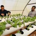 リビアの首都トリポリから東に約40キロ離れた小さな町で、レタスの水耕栽培を行うシラジュ・ベチアさん(右)とパートナーのムニルさん(2021年3月5日撮影)。(c)Mahmud TURKIA / AFP