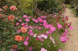 秋に見ごろを迎える花々が楽しめる/写真は主催者提供