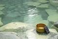 中国メディアは、日本の温泉は中国の温泉と大きく違っているため、多くの中国人が日本の温泉を体験するために訪日していると紹介する一方、中国人のマナー違反が原因で日本人客からの反感を招いていると伝えている。(イメージ写真提供:123RF)