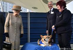 英ロンドンの動物保護施設でコーギーにほほ笑むエリザベス女王(左、2015年3月17日撮影、資料写真)。(c)BEN STANSALL / POOL / AFP