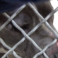 Saving Carson Shelter Dogs/Facebook