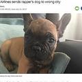 バーバンクに向かうはずがシカゴに到着してしまった犬(画像は『CNN 2017年7月16日付「United Airlines sends rapper's dog to wrong city」』のスクリーンショット)