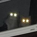 激オコ? 暗闇の自宅から猫ビーム