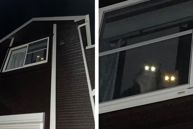 「我々を置いて食べてきたシースーは美味かったか?」暗闇の自宅から猫ビーム「これは激オコですわ…」