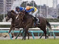 【ミモザ賞】ハービンジャー産駒 エアジーンが2勝目