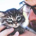 猫を抱いた写真は女性へのアピールで不利?男らしくないとみられると発表