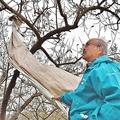 木に残ったごみを見上げる井砂さん(福島県国見町で)