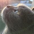 今朝のうちの猫(美顔横顔)01