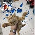 飼い主の渾身作を一瞬にしてバラバラにした子猫(画像は『ภูมิมัย พรทอง 2019年12月27日付 Facebook「!!ไอ้แมวนรก!! กูประกอบมาเป็นอาทิ ลูกค้าจะเอาก่อนปีใหม่..4,500 กูแตกละเอียด!!!」』のスクリーンショット)