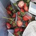 ハウス前に設置されたゴミ袋には半分以上残されたイチゴが(画像はル・フカサク(深作農園)(@Le_fukasaku)さんから)