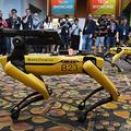 米ボストン・ダイナミクスが開発したロボット犬「スポット」(2019年6月4日撮影、資料写真)。(c)Mark RALSTON / AFP