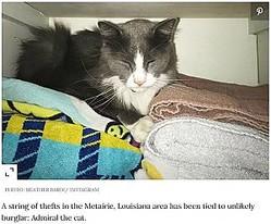 近所中から洗濯物を盗む猫(画像は『People.com 2020年7月8日付「'Kleptomaniac' Kitty Caught Stealing Neighbors' Clean Laundry, Bathing Suits, Socks and More」(PHOTO: HEATHER BARDI/ INSTAGRAM)』のスクリーンショット)