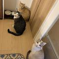 エサが来るまでじっと待つ猫3匹の「無言の圧」投稿に注目