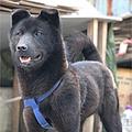 韓国 女子大で犬を飼育し食用に