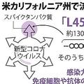 米国流行の変異株 日本人6割「免疫」...