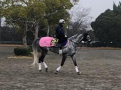 【有馬記念】アエロリット 菊沢師「上手く息をいれられれば」