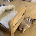 愛猫に猫用ベッドを購入も…「そこじゃないのよ」思わずツッコミ