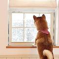 おっ、雪が降っているぞ!!