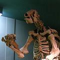 氷河期のオオナマケモノの化石を発見 自分たちのフンが原因で大量死か
