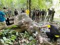 ゾウの死骸に大量のプラごみ 消化器官に詰まり出血か