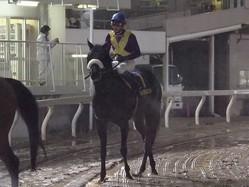 【東京スプリント】武豊「メドは立ちましたね」ヒロシゲゴールド重賞初挑戦で3着