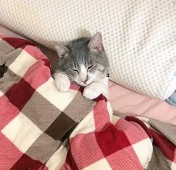 「癒やされない人がいたら400万払ってもいい」座ったまま居眠りする猫さんがかわいくて癒やされてしまう