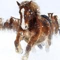 急に暴れ…乗馬場で馬に頭を蹴られた女子大生が意識不明の重体