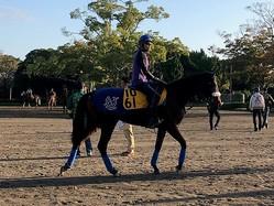 【府中牝馬S】ダノングレース 国枝師「重賞でもやれる」